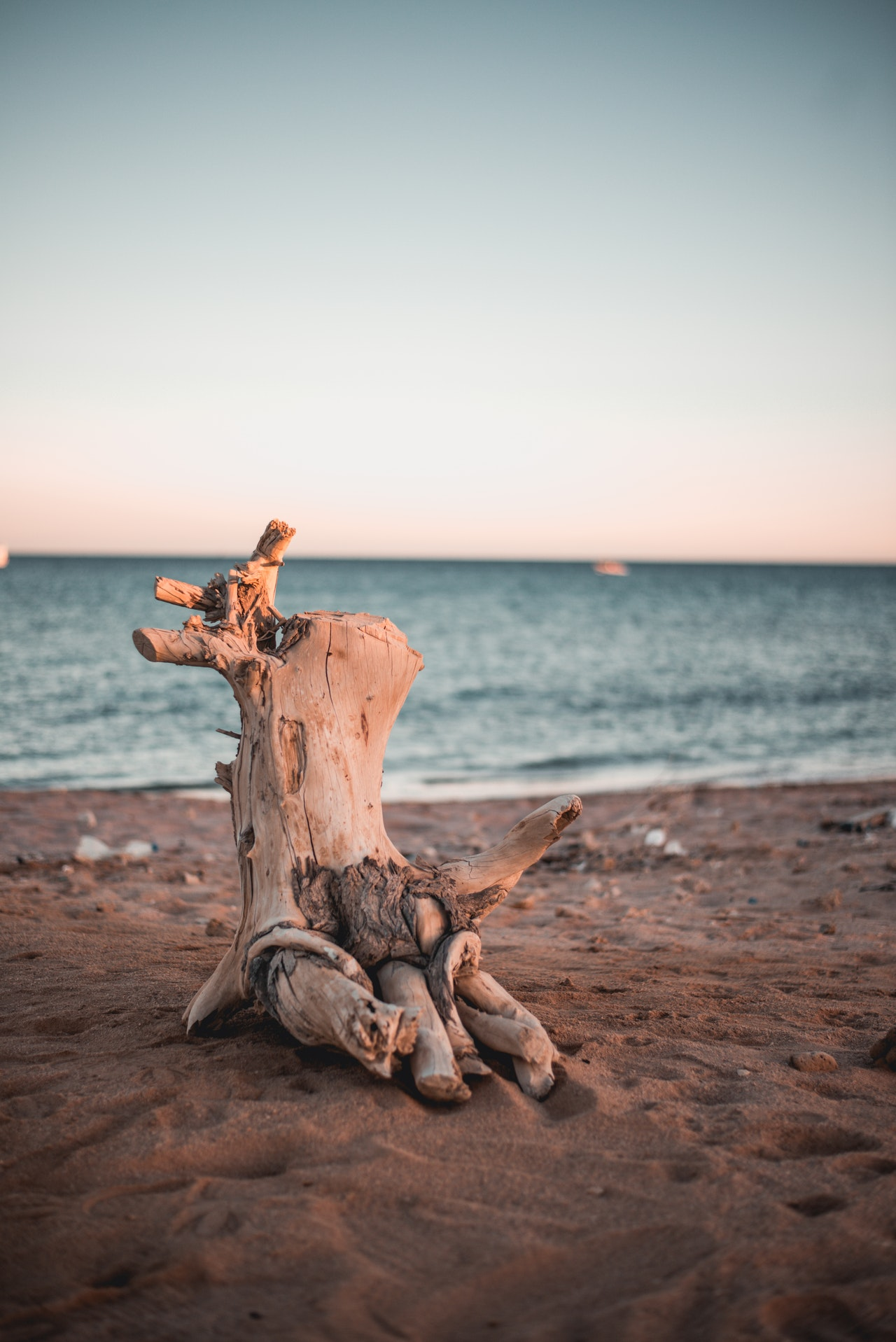 How To Make A Driftwood Sculpture Simple Step By Guide