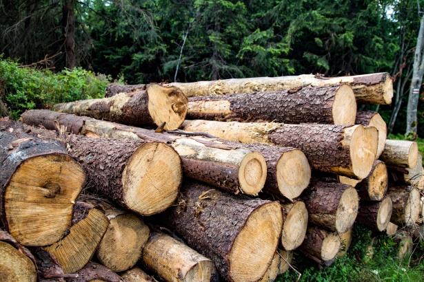 pine firewood