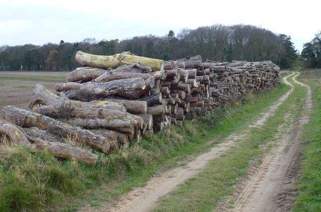 Air Seasoning of wood